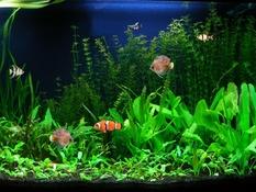 Image Free Fish Aquarium Screensaver 1.0