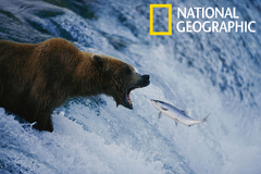 Imagen National Geographic: Best of Photo of the Day Screensaver
