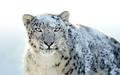 Mac OS X Snow Leopard Wallpapers - Imagen 1